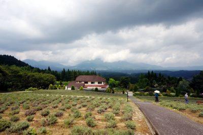 ラベンダー畑から蒜山を望む