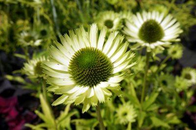 「Herbill」の庭に咲いてた花
